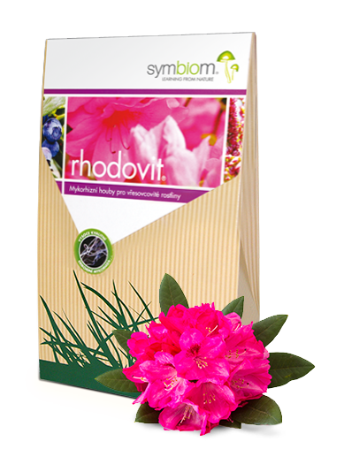 17. Rhodovit rododendron i wrzos