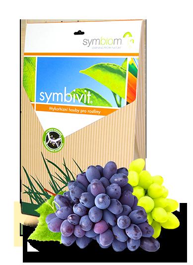 2. Symbivit winnice